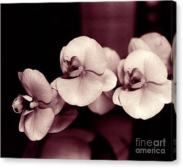 Canvas Print featuring the photograph Orchids Hawaii by Mukta Gupta