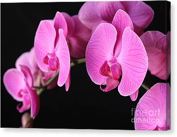 Orchids In Bloom Canvas Print by Angie Bechanan