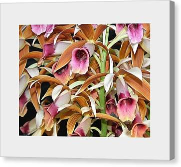 Orchids In Bloom Canvas Print by Mindy Newman