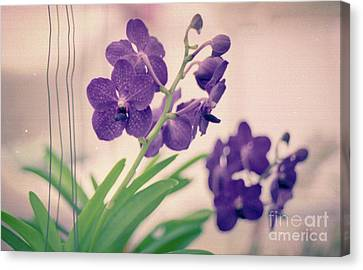 Canvas Print featuring the photograph Orchids In Purple  by Ana V Ramirez