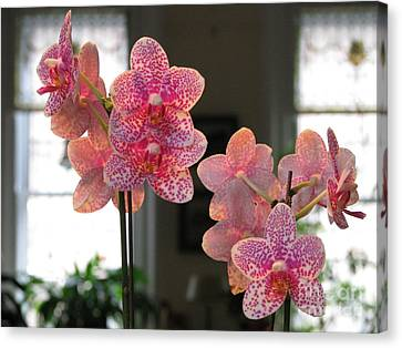Canvas Print featuring the photograph Orchids In The Parlor by Erik Falkensteen