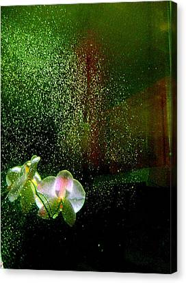 Orchids In The Rain Canvas Print by Shirley Sirois