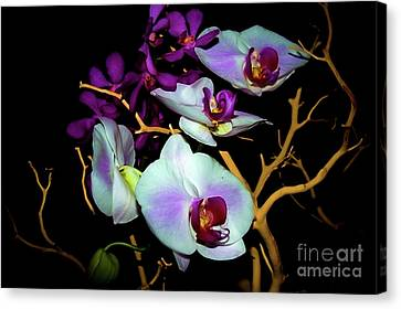 Canvas Print featuring the photograph Orchids In Water Color by Diana Mary Sharpton