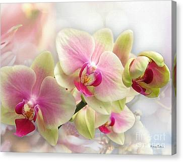 Orchids Canvas Print by Morag Bates