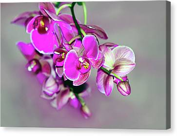 Canvas Print featuring the photograph Orchids On Gray by Ann Bridges