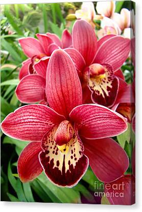 Canvas Print featuring the photograph Orchids Up Close by Sue Melvin