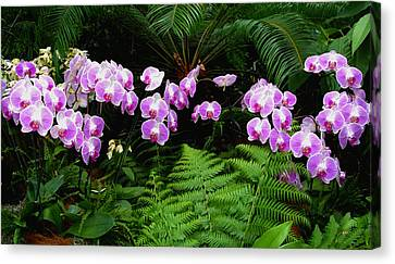 Canvas Print featuring the photograph Orchids With Fern-panoramic by Margie Avellino