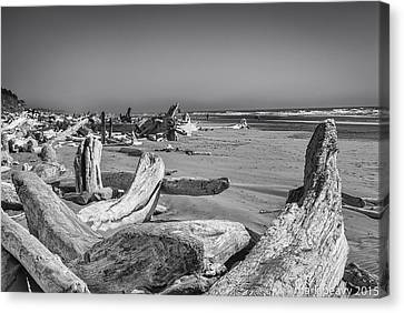 Oregon Beach Driftwood Canvas Print