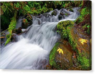 Oregon Cascade Canvas Print by Jonathan Davison