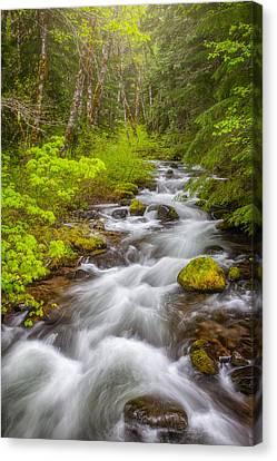Oregon Creek Canvas Print by Darren White