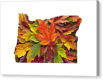 Canvas Print - Oregon Maple Leaves Mixed Fall Colors Background by David Gn