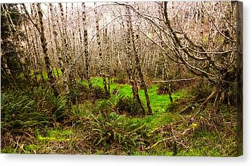 Oregon Rainforest Canvas Print