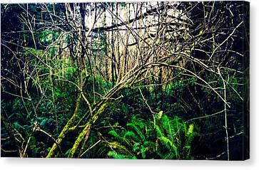 Oregon Rainforest II Canvas Print