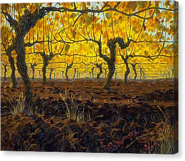 Oregon Vineyard Golden Vines Canvas Print by Michael Orwick