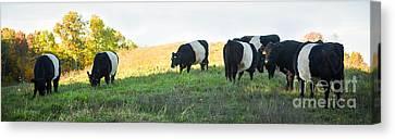 Canvas Print featuring the photograph Oreos - Milk Included by Carol Lynn Coronios