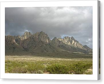 Angus Steer Canvas Print - Organ Mountains Christmas 2015 by Jack Pumphrey