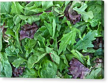 Organic Baby Lettuce Spring Mix Canvas Print by Inga Spence
