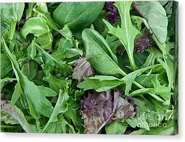 Organic Spring Mix Salad Mix Canvas Print by Inga Spence