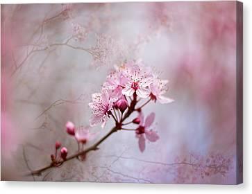 Oriental Blossom Canvas Print by Jacky Parker