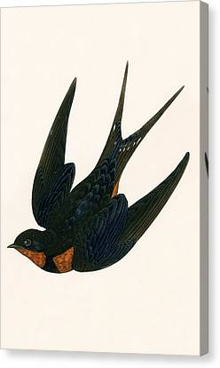 Oriental Chimney Swallow Canvas Print by English School