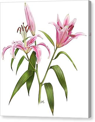Oriental Lily Stargazer Canvas Print
