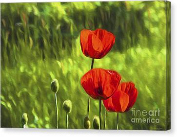Oriental Poppies Canvas Print by Veikko Suikkanen