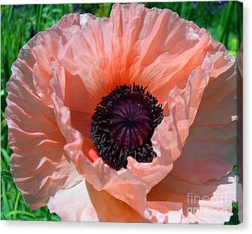 Oriental Poppy Canvas Print by Addie Hocynec