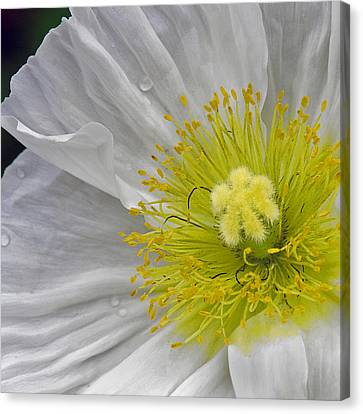 Canvas Print featuring the photograph Oriental Poppy by Thanh Thuy Nguyen