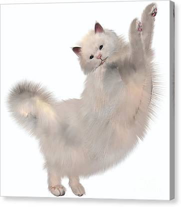 Oriental White Cat Canvas Print by Corey Ford