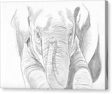 Original Pencil Sketch Elephant Canvas Print by Shannon Ivins