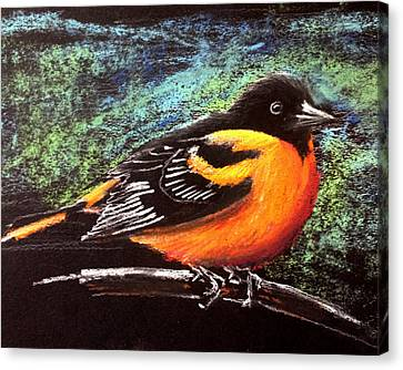 Orioles Canvas Print - Oriole by Holly Whiting