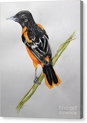 Orioles Canvas Print - Oriole by Jamie Silker