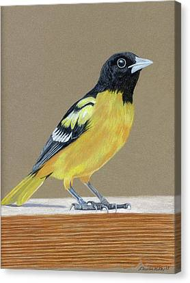 Orioles Canvas Print - Oriole by Laurie With