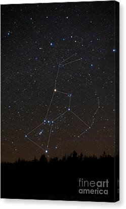 Orion Constellation Canvas Print by Larry Landolfi