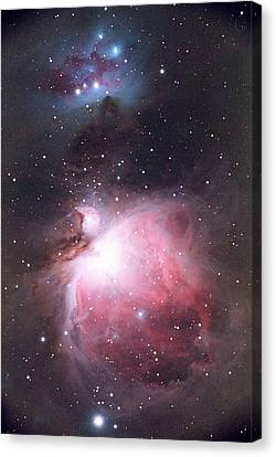 Orion Nebula Canvas Print by Chris Madeley