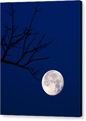 Canvas Print featuring the photograph Ornament by Alan Raasch
