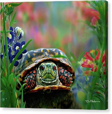 Ornate Box Turtle Canvas Print