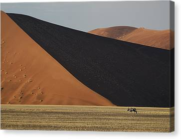 Oryx And Dunes Canvas Print by Christian Heeb