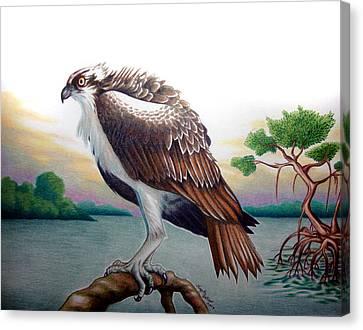 Osprey Canvas Print - Osprey At Dusk by Angela De Riso