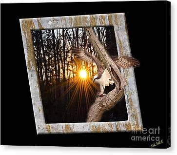 Osprey At Sunset  Black Canvas Print by Donna Brown