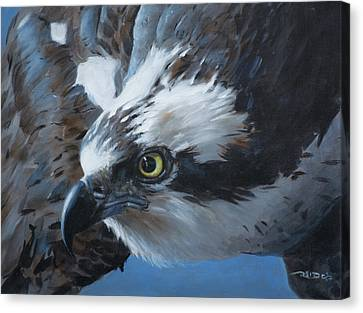 Seahawk Canvas Print by Christopher Reid