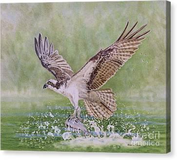 Osprey Canvas Print - Osprey Fishing by Elaine Jones