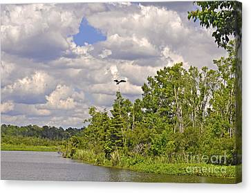 Osprey From Flight Canvas Print by Donnie Smith