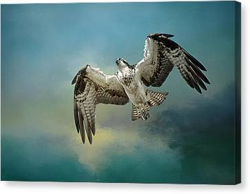 Osprey In A Glide Canvas Print