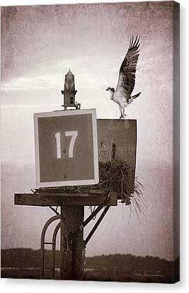 Osprey Landing On Channel Marker 17 Canvas Print by Dan Beauvais