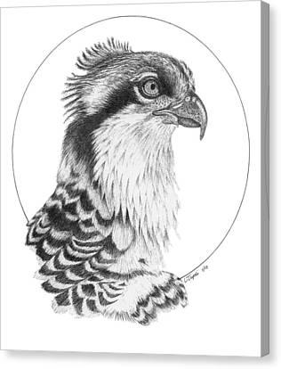 Osprey Canvas Print by Lawrence Tripoli