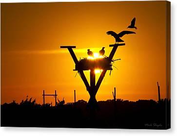 Osprey Nest At Sunset Canvas Print