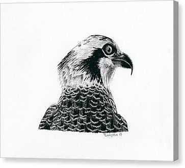 Osprey Canvas Print - Osprey Portrait by Timothy Livingston
