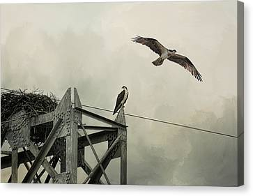 Ospreys At Pickwick Canvas Print by Jai Johnson