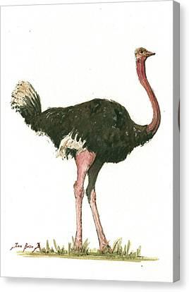 Ostrich Canvas Print - Ostrich Bird by Juan Bosco